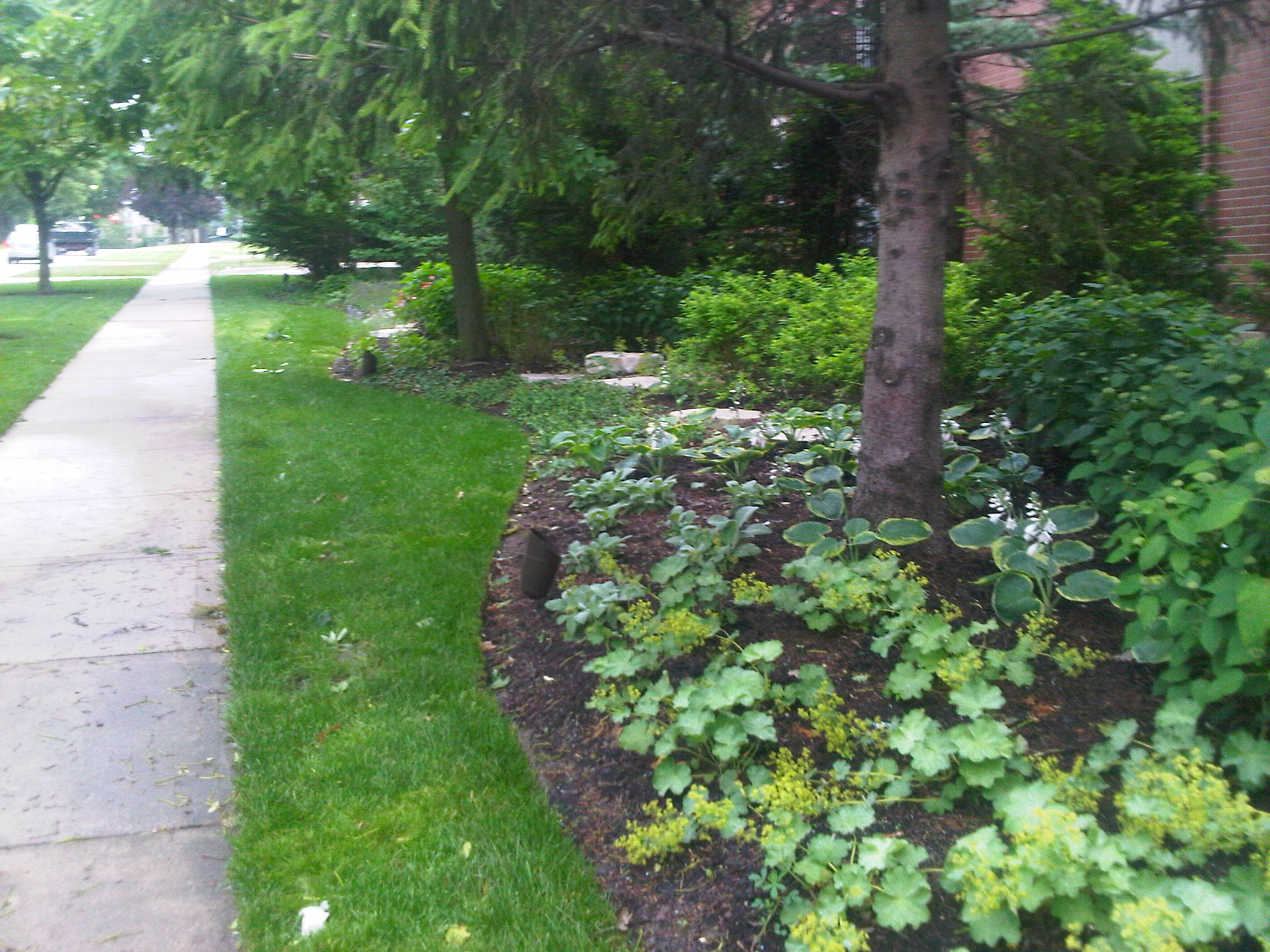 The Importance of Tree Pruning in Your Wilmette, IL, Lawn Care Service