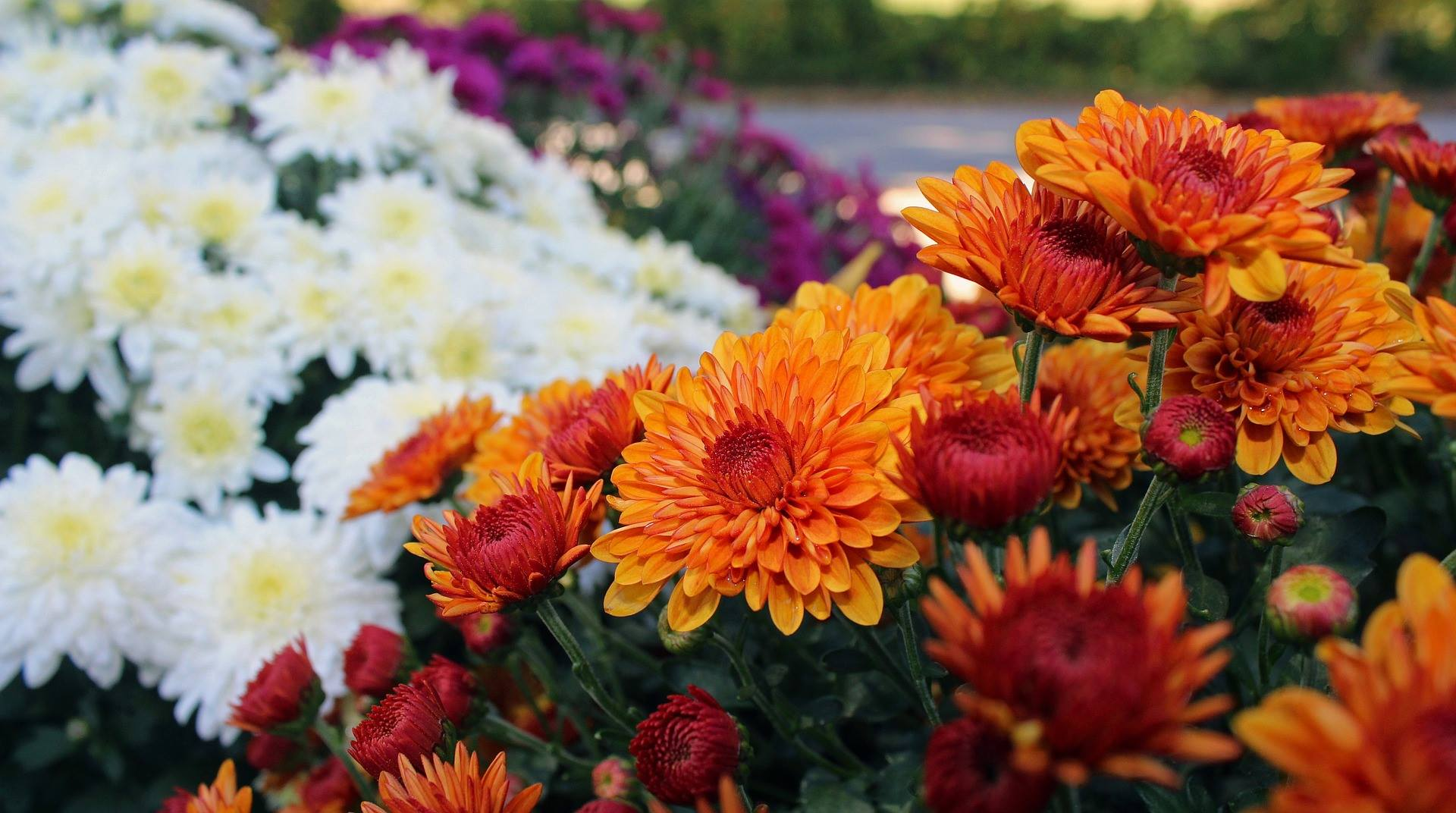 Landscaping design improved with colorful flowers in Sugar Grove, IL