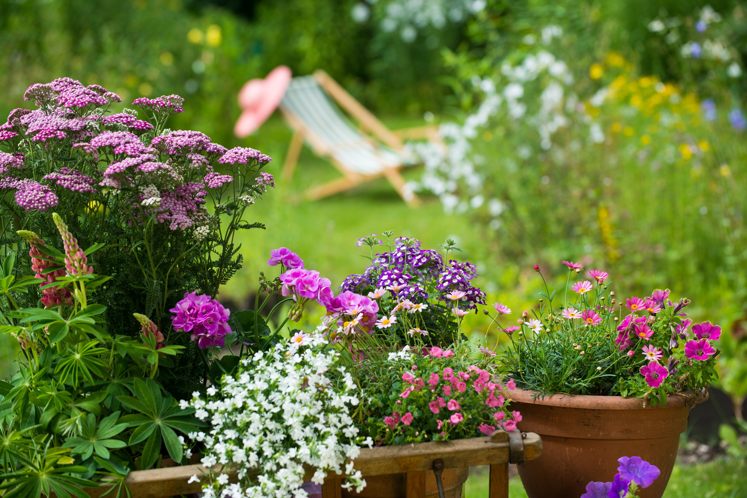 8 Low-Maintenance Plantings for Your Plainfield, IL, Landscaping