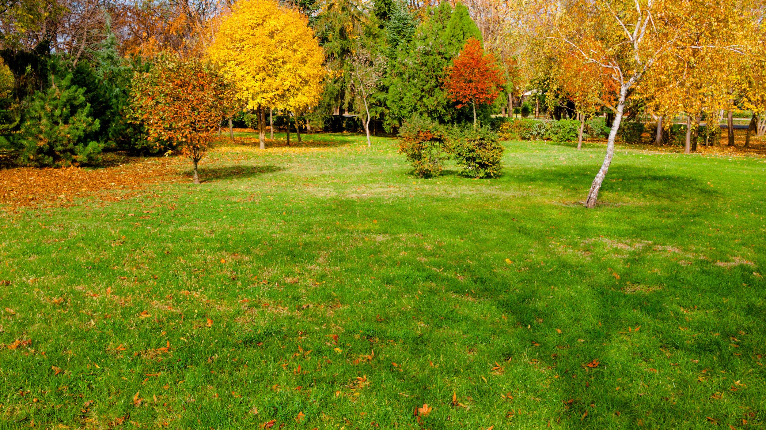 What is Included in Fall Clean Up with a Landscaping Company in Naperville, IL.jpeg