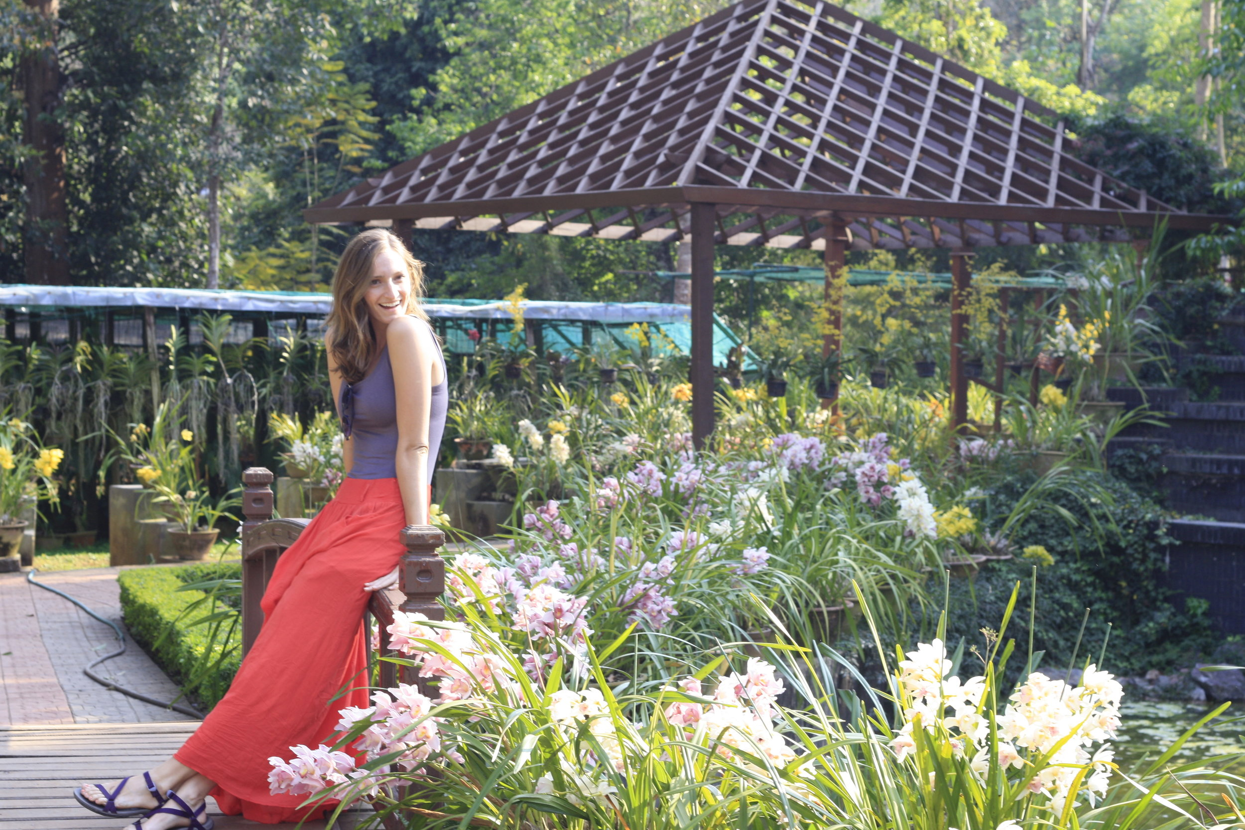 Orchids in the National Gardens in Pyin Oo Win