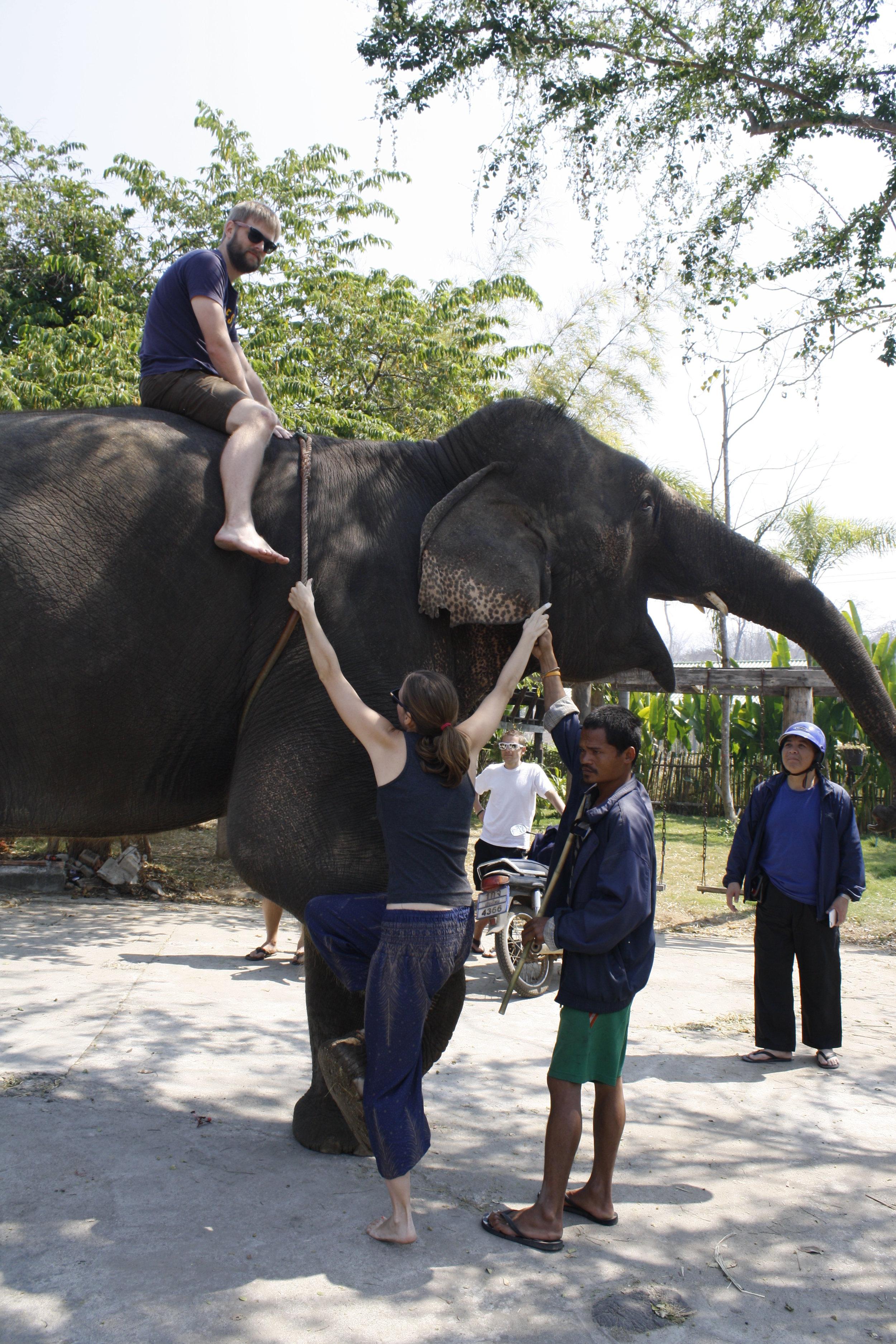 Elephants in Pai