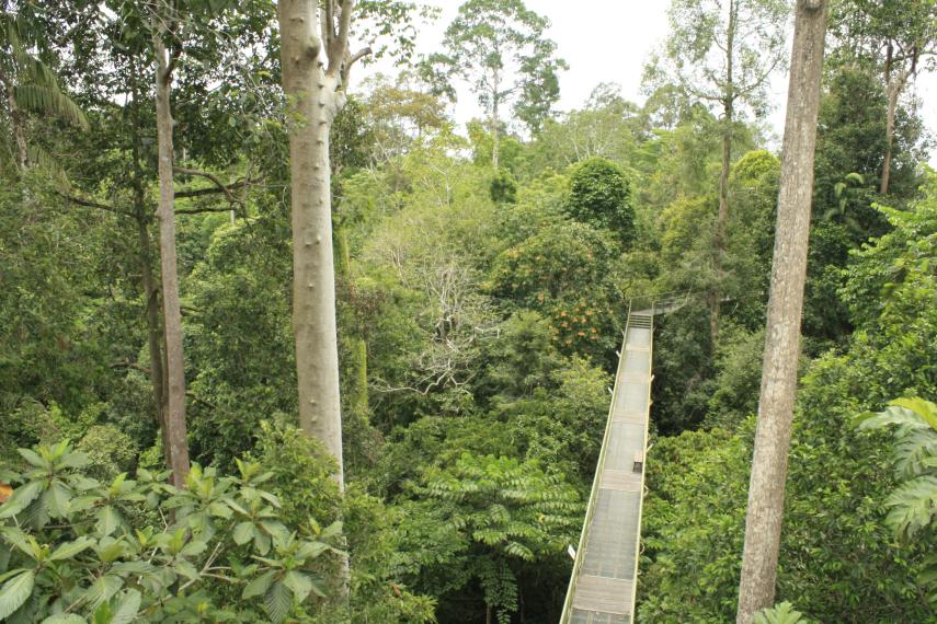 Rainforest Discovery Center, sepilok