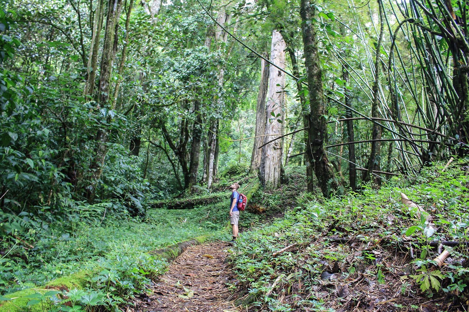 Miles and miles of gorgeous hiking trails near Boquete.