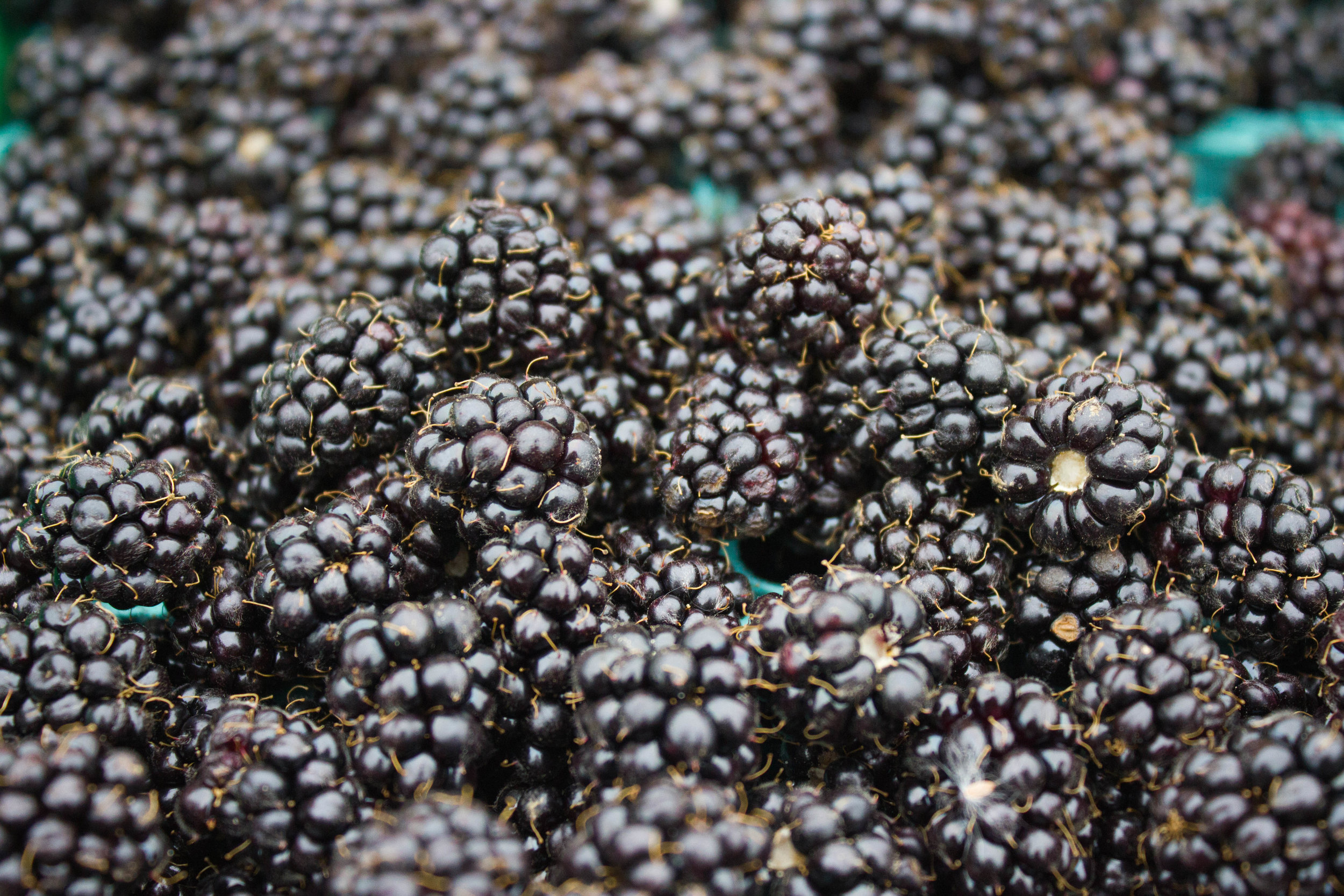 Dark berries -