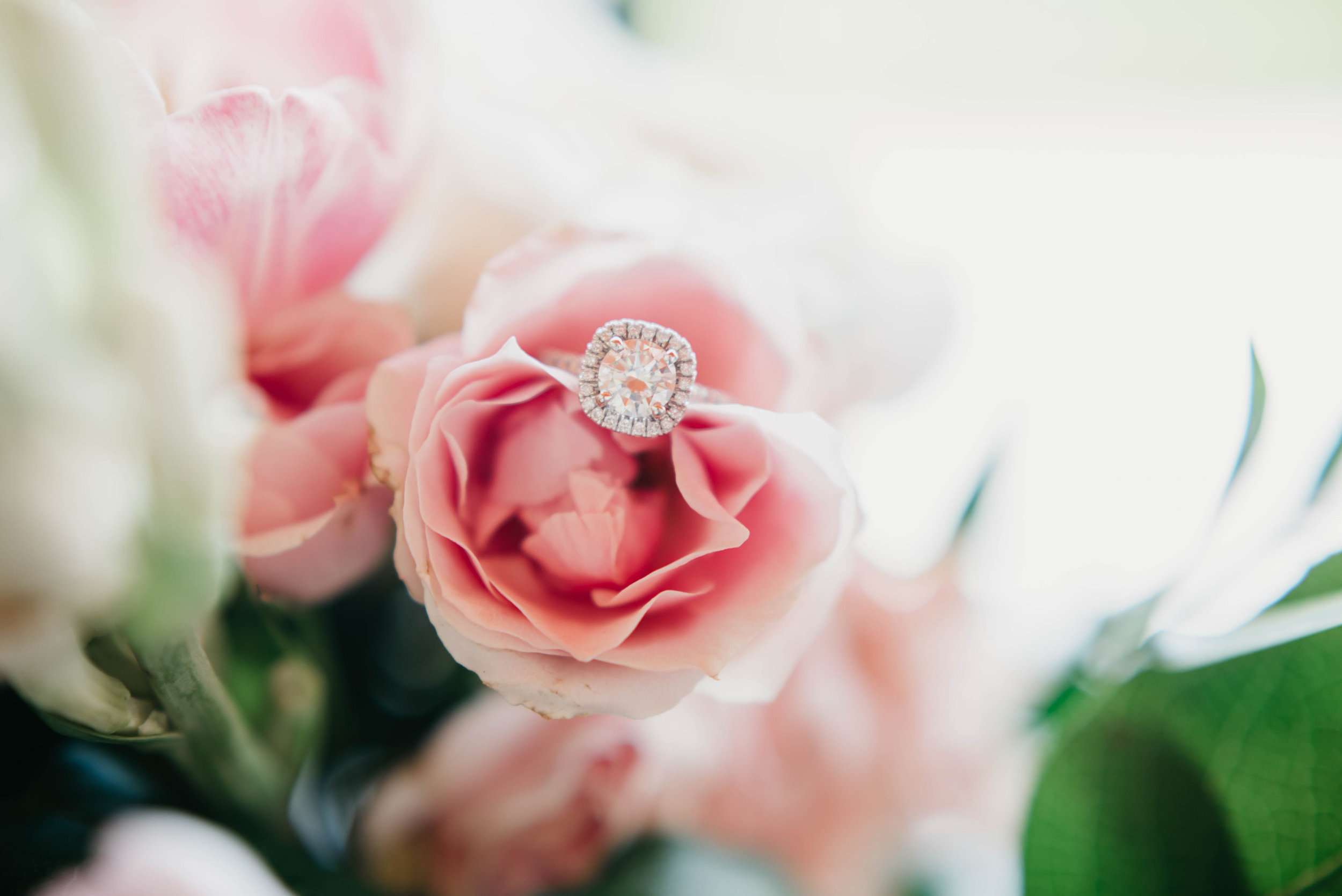 Rings ll-Katelyn V Photography.jpg
