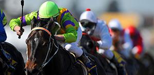 Executive Car Services to Horse Racing