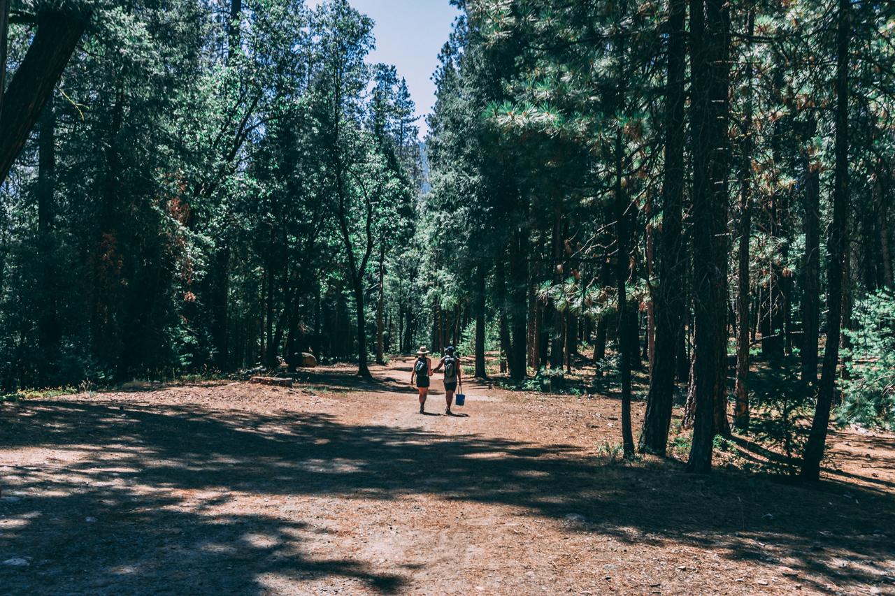 A moment apart, enjoying a quite walk through the trees.