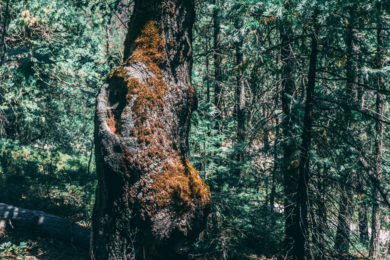 Yosemite-2018-13.jpg