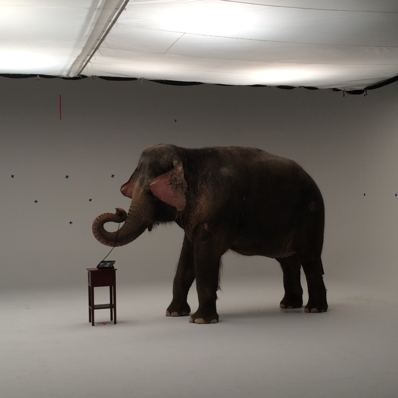 C Animals4.JPG