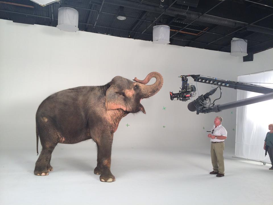 C loc elephant.jpg