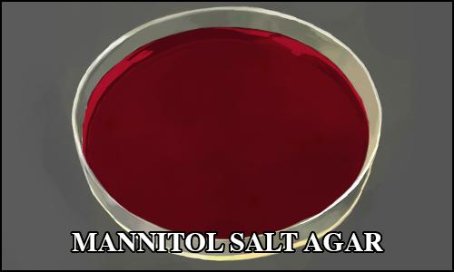 mannitolsaltagar.png