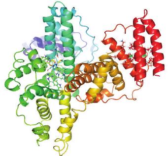 Model structure of Bovine Serum Albumin via Chinnathambi et al.[3]