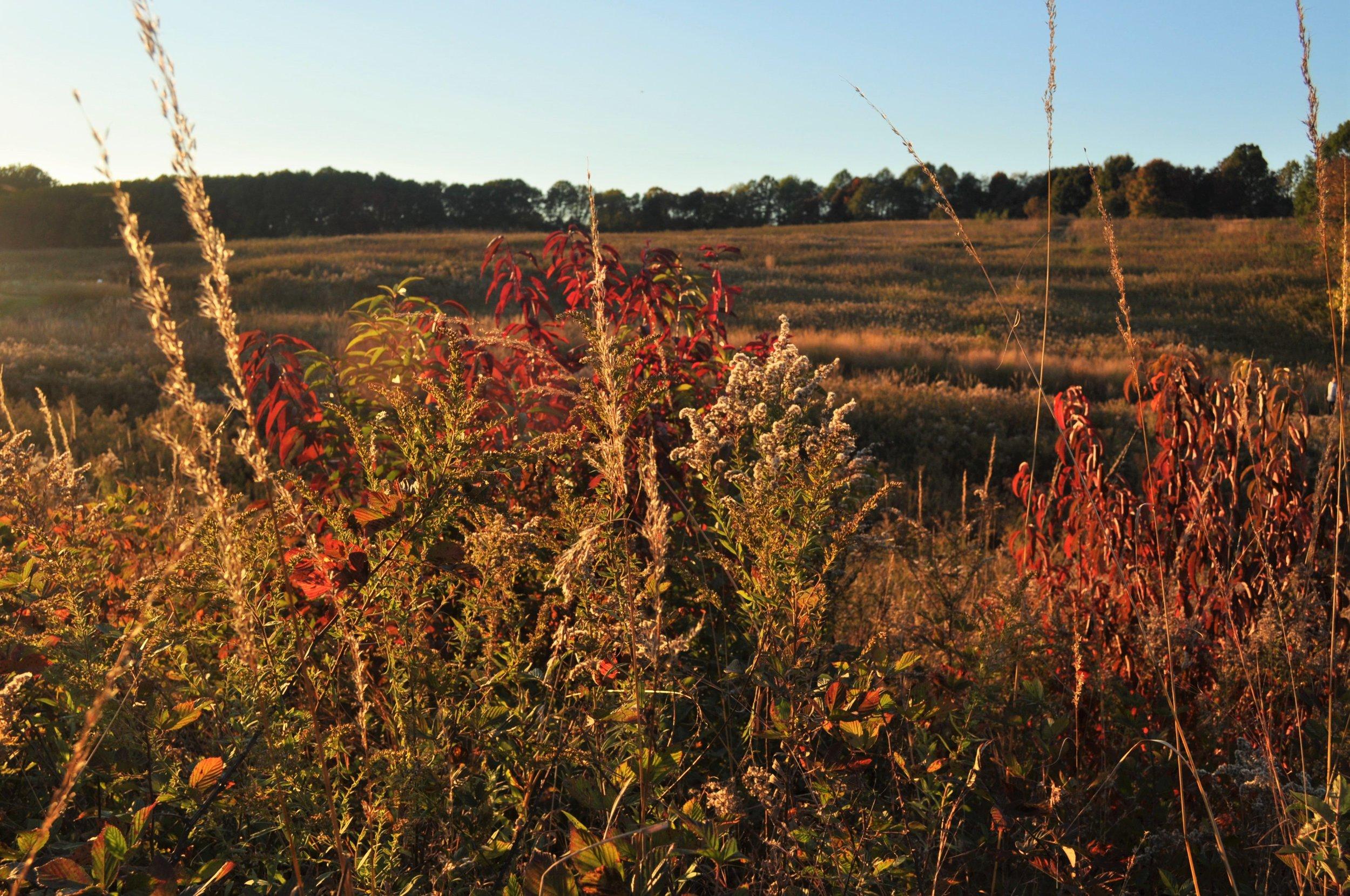 Fall Meadow close up.JPG