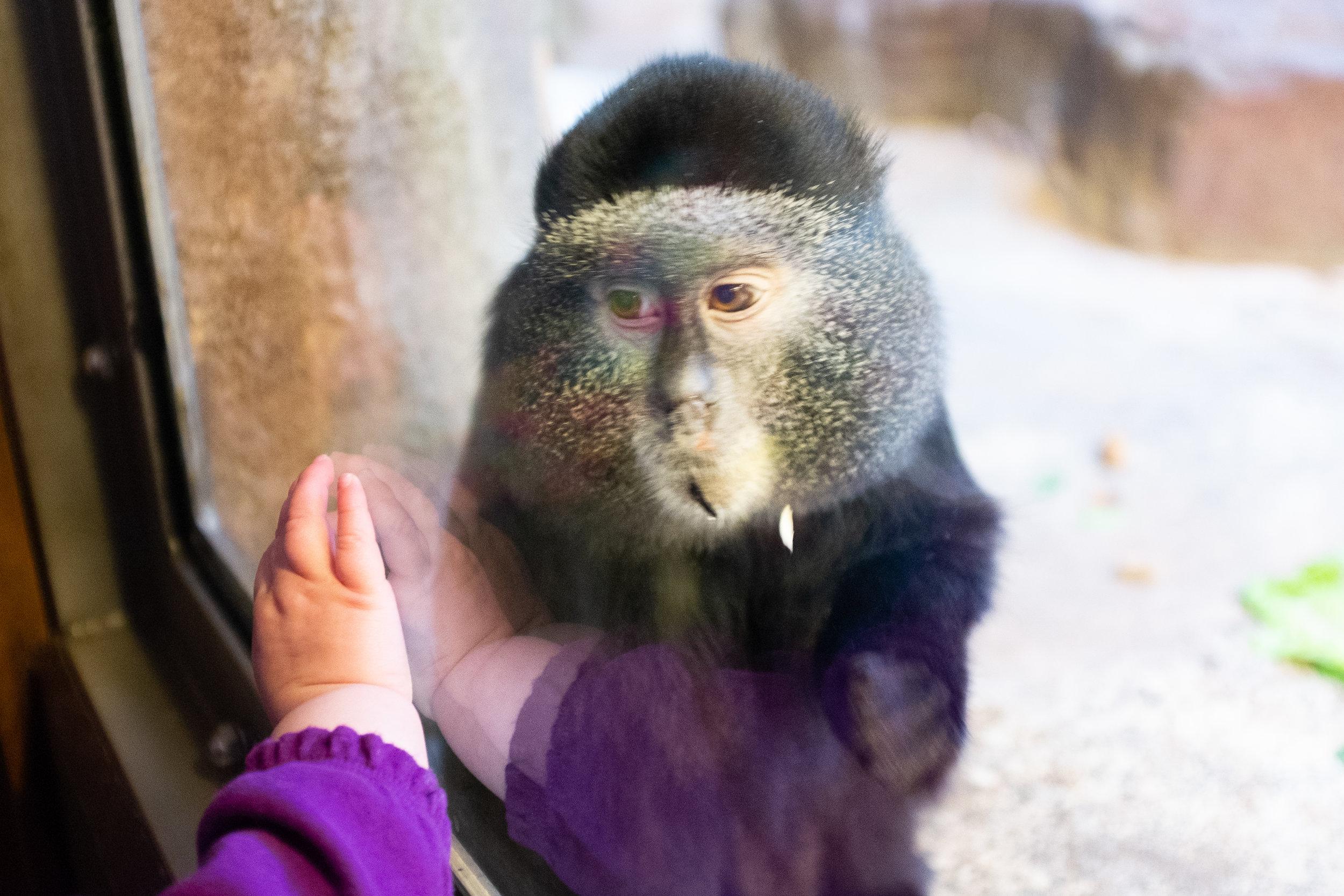 mikemccawley_monkey.jpg