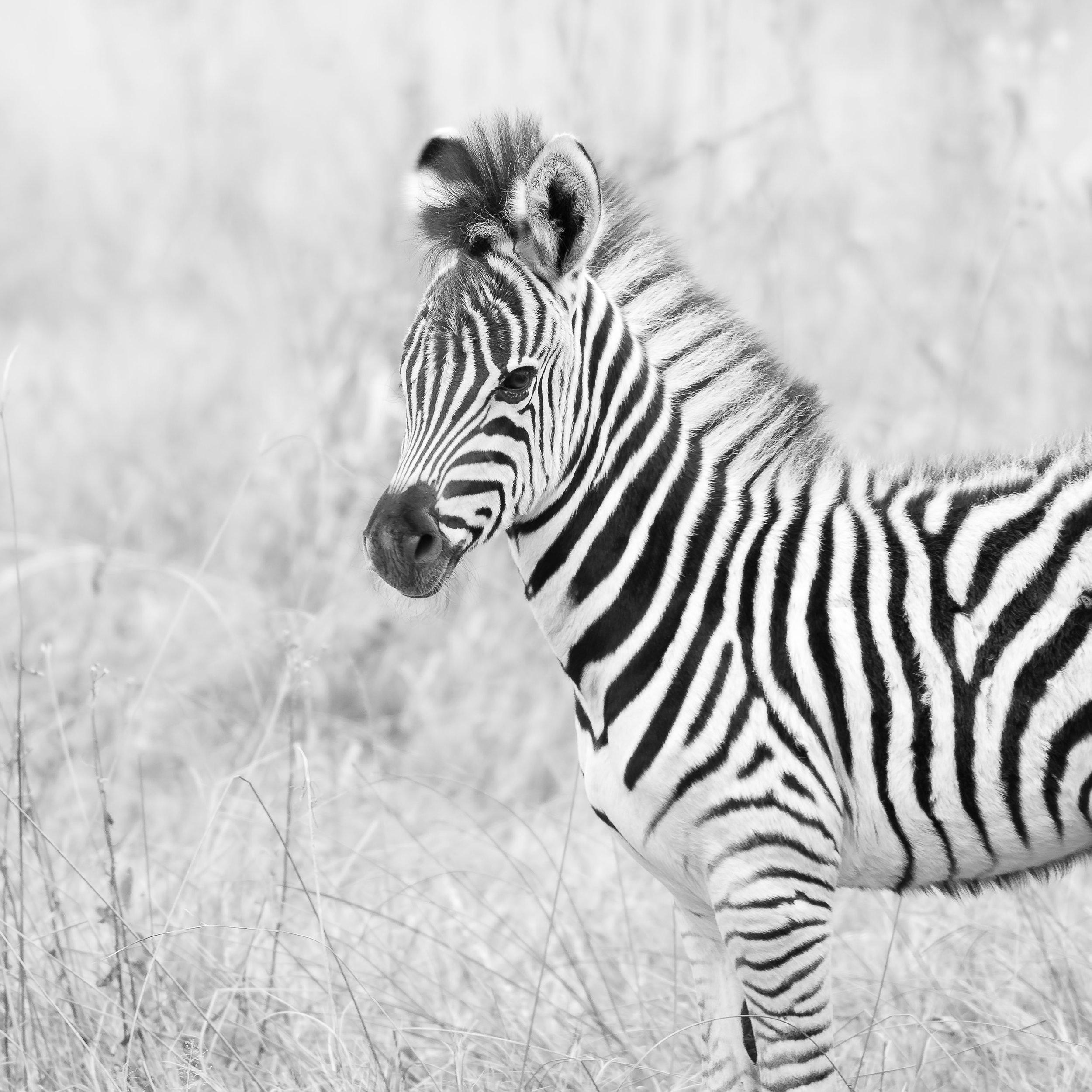 Erin-Fabio-Photography-Africa-2018-47.jpg