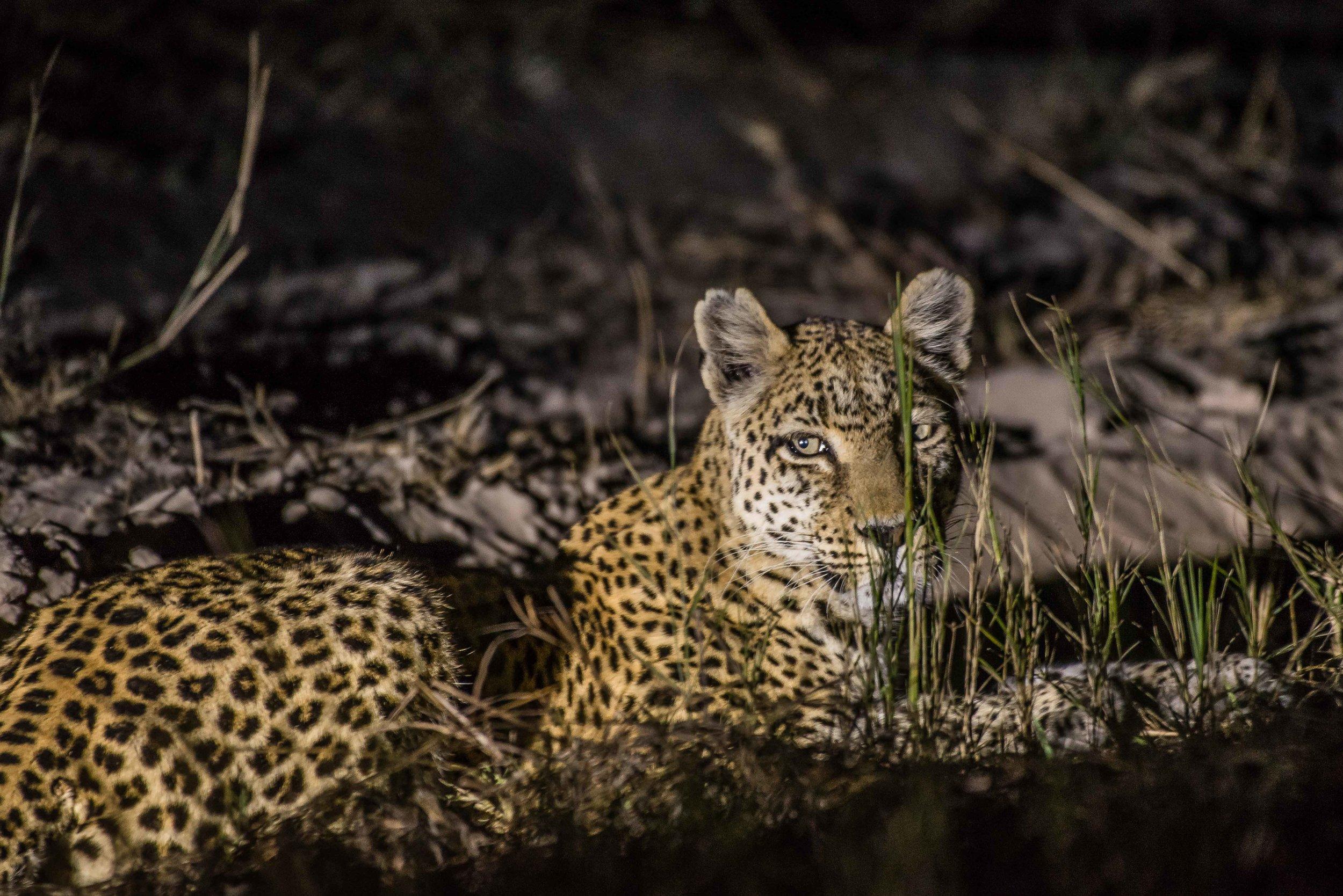 Erin-Fabio-Photography-Africa-2018-22.jpg