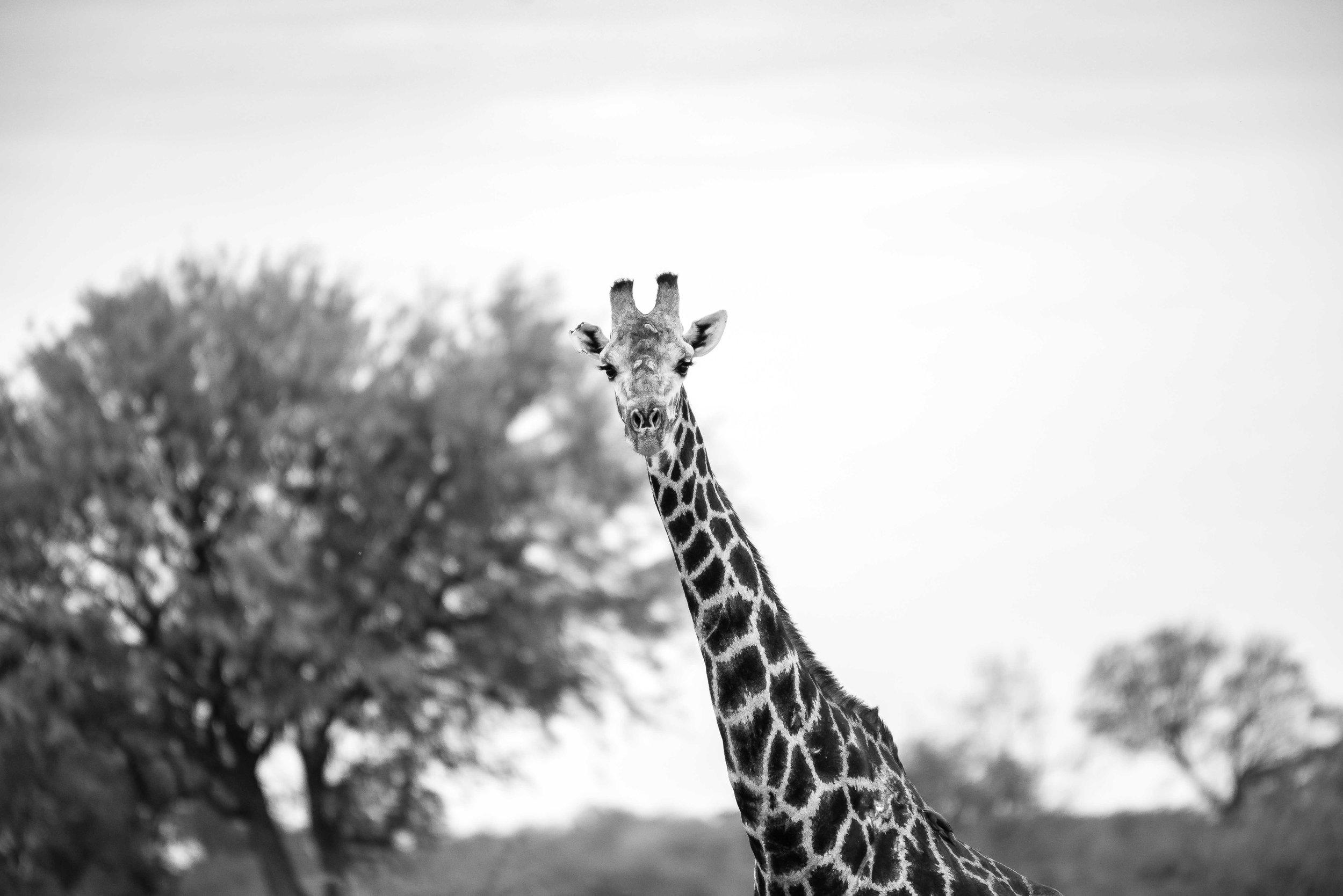 Erin-Fabio-Photography-Africa-2018-36.jpg