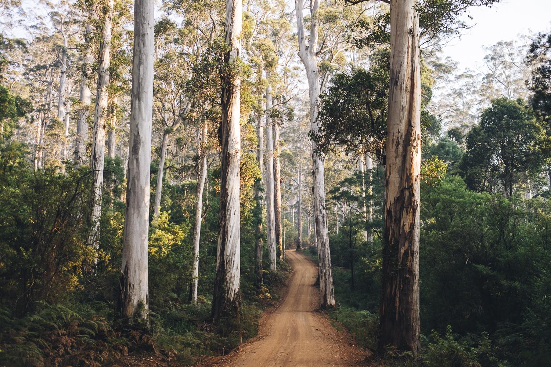 Karri Forest Explorer _Photo Russell Ord-13.jpg
