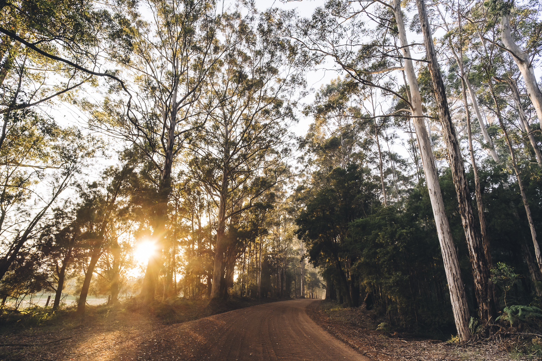 Karri Forest Explorer _Photo Russell Ord-52.jpg