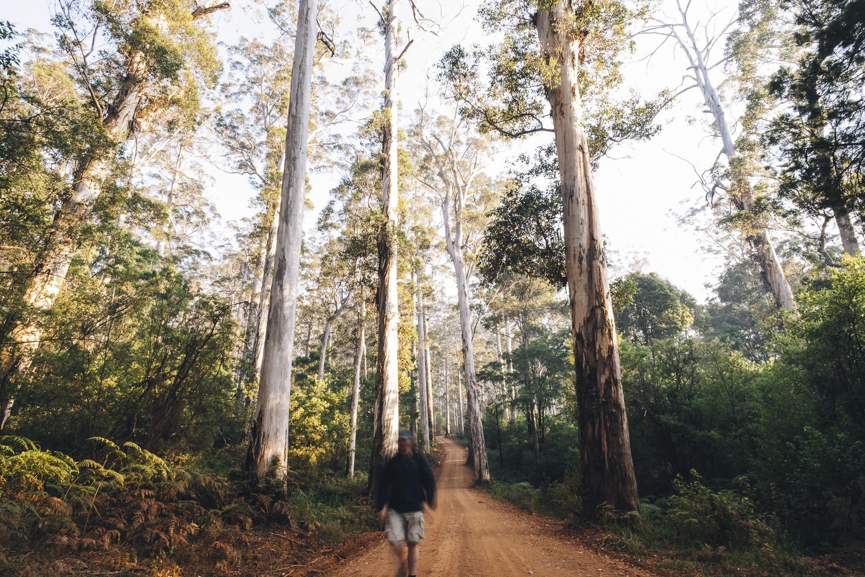 Karri Forest Explorer _Photo Russell Ord-59.jpg