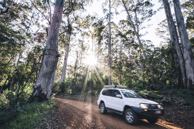 Karri Forest Explorer _Photo Russell Ord-63.jpg