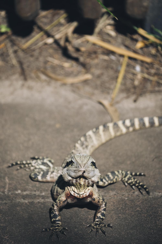 Australia Zoo_Queensland_Photo Ord-22.jpg