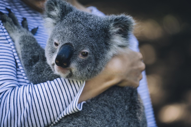 Australia Zoo_Queensland_Photo Ord-31.jpg