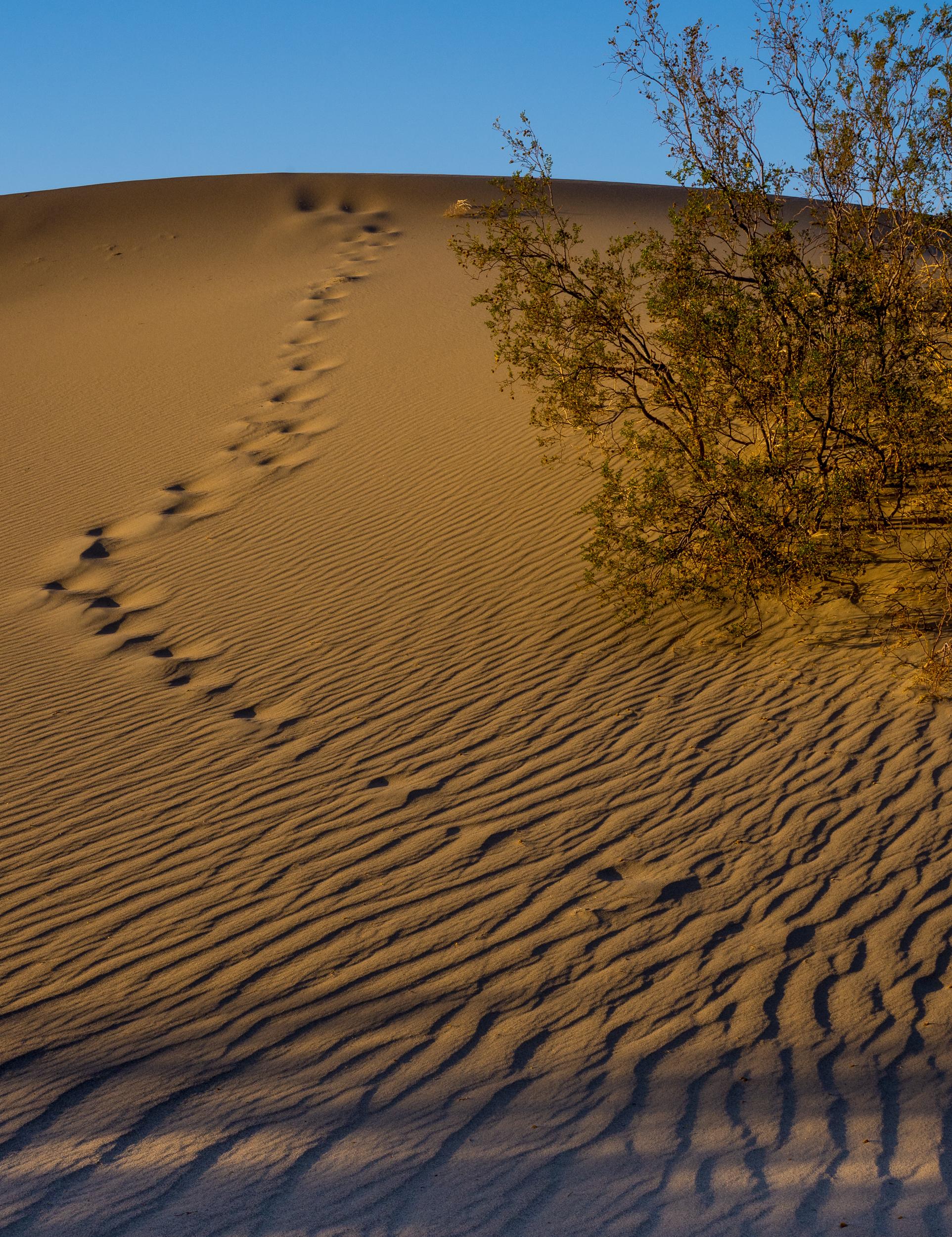 Death Valley Sand Dunes-51.jpg