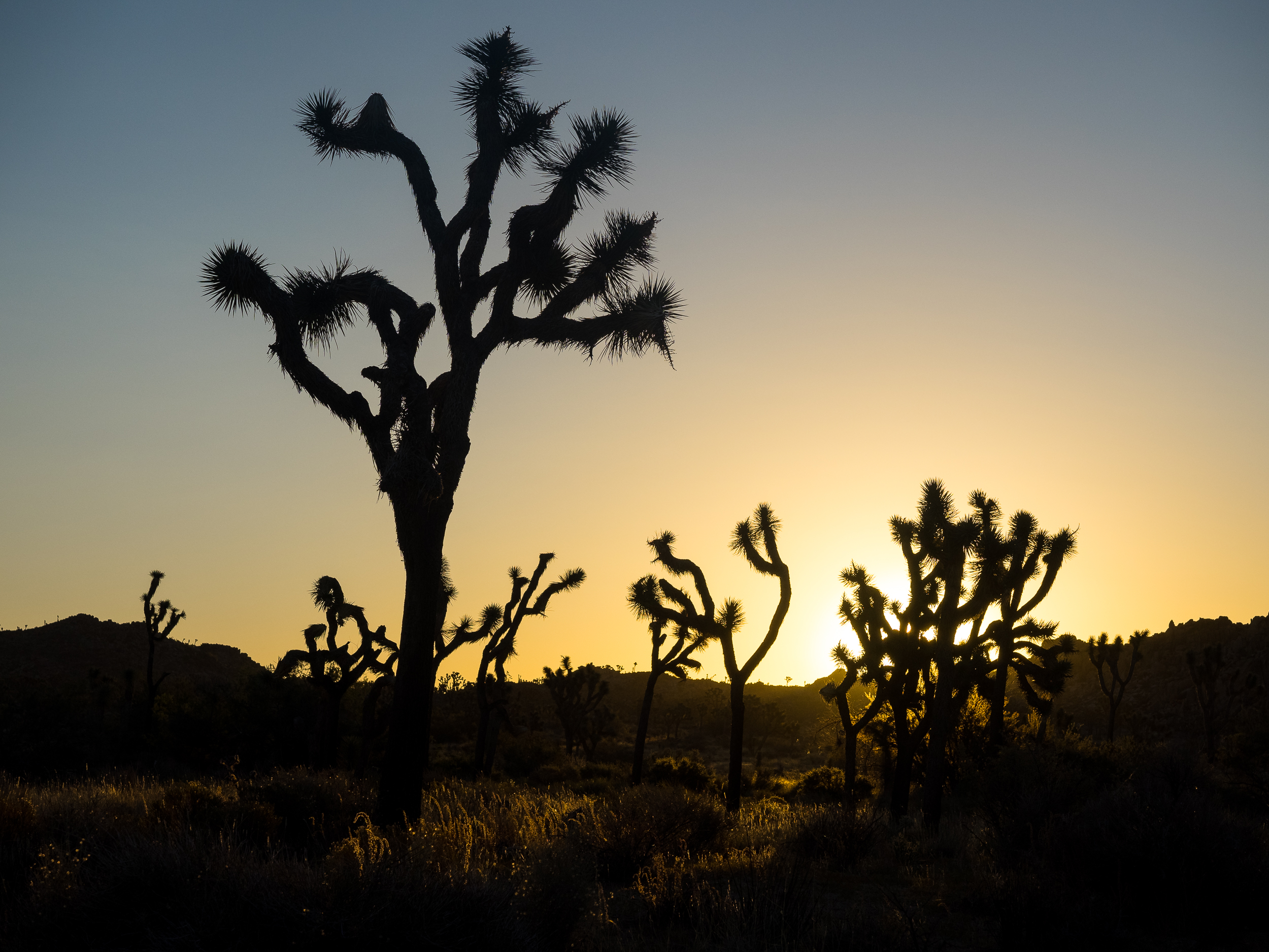 Joshua Tree National Park-87.jpg