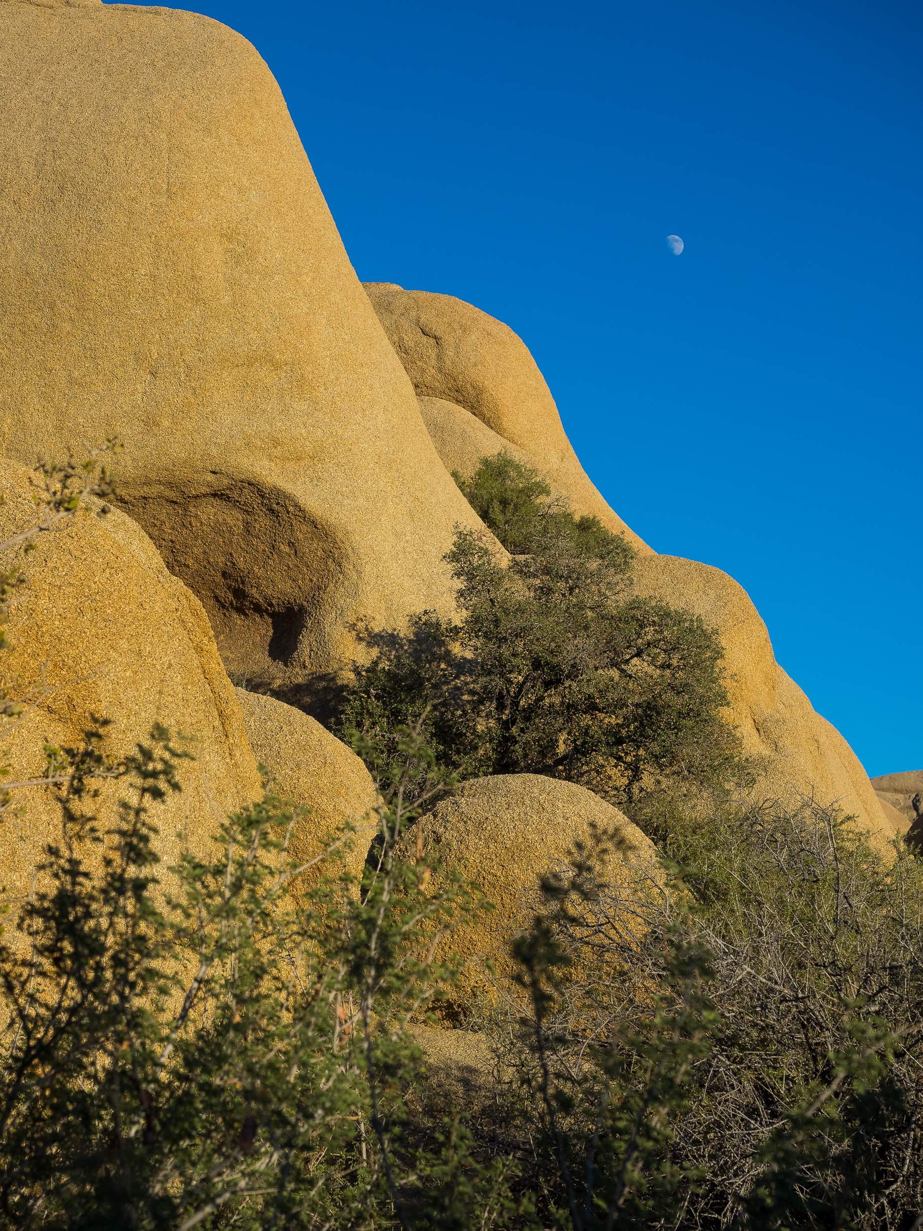 Joshua Tree National Park-34.jpg