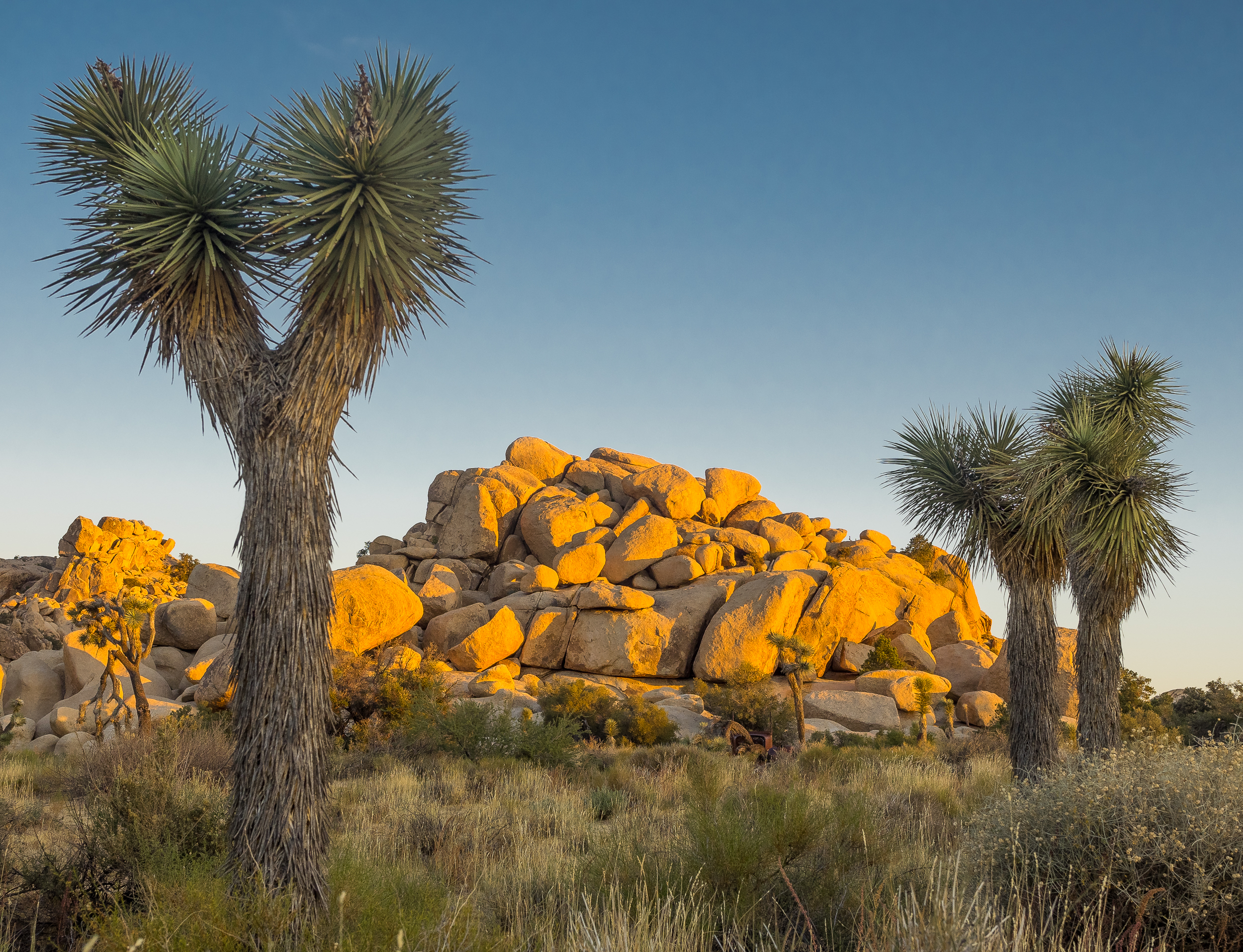 Joshua Tree National Park-75.jpg