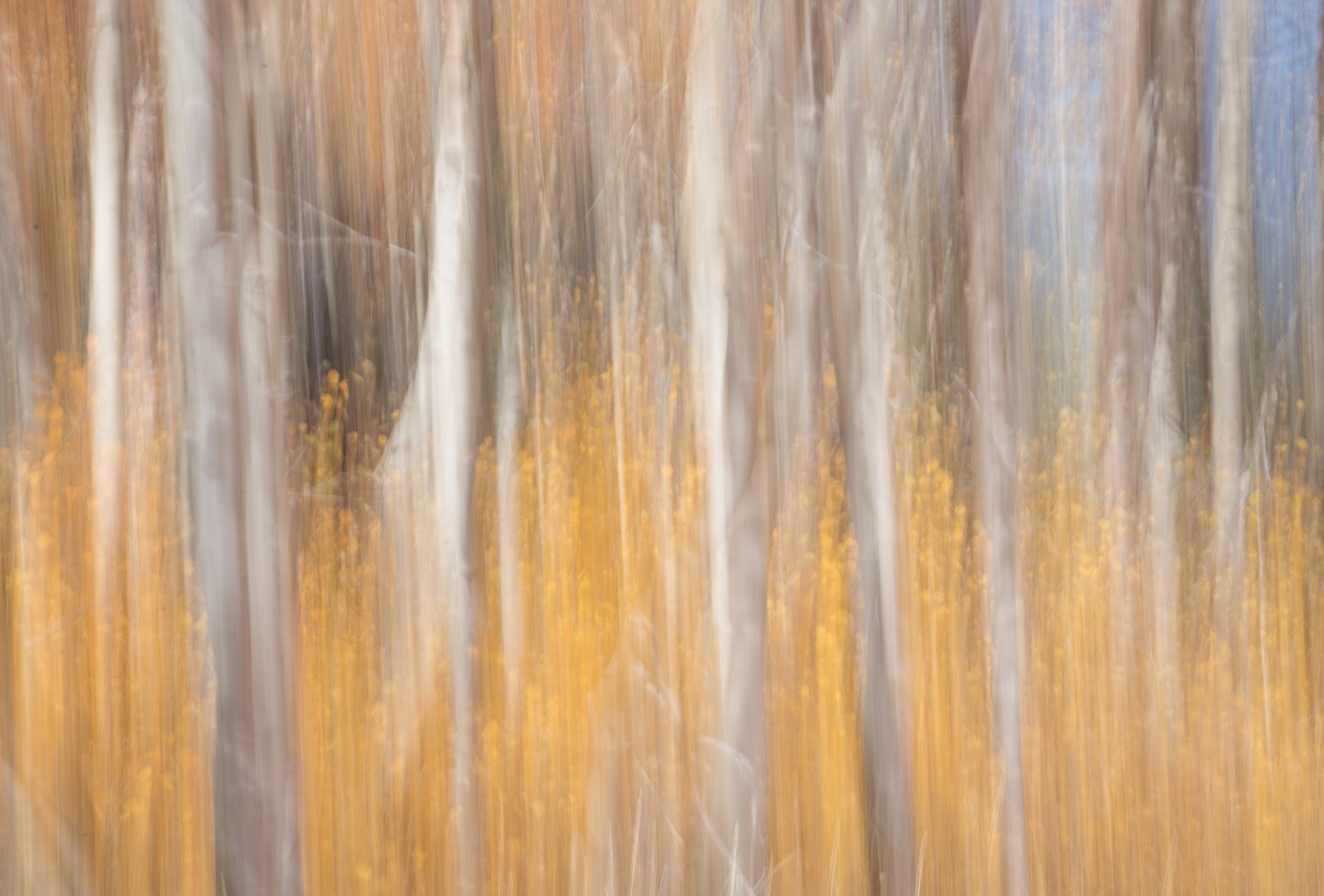 Rock Creek Canyon Aspens-23.jpg