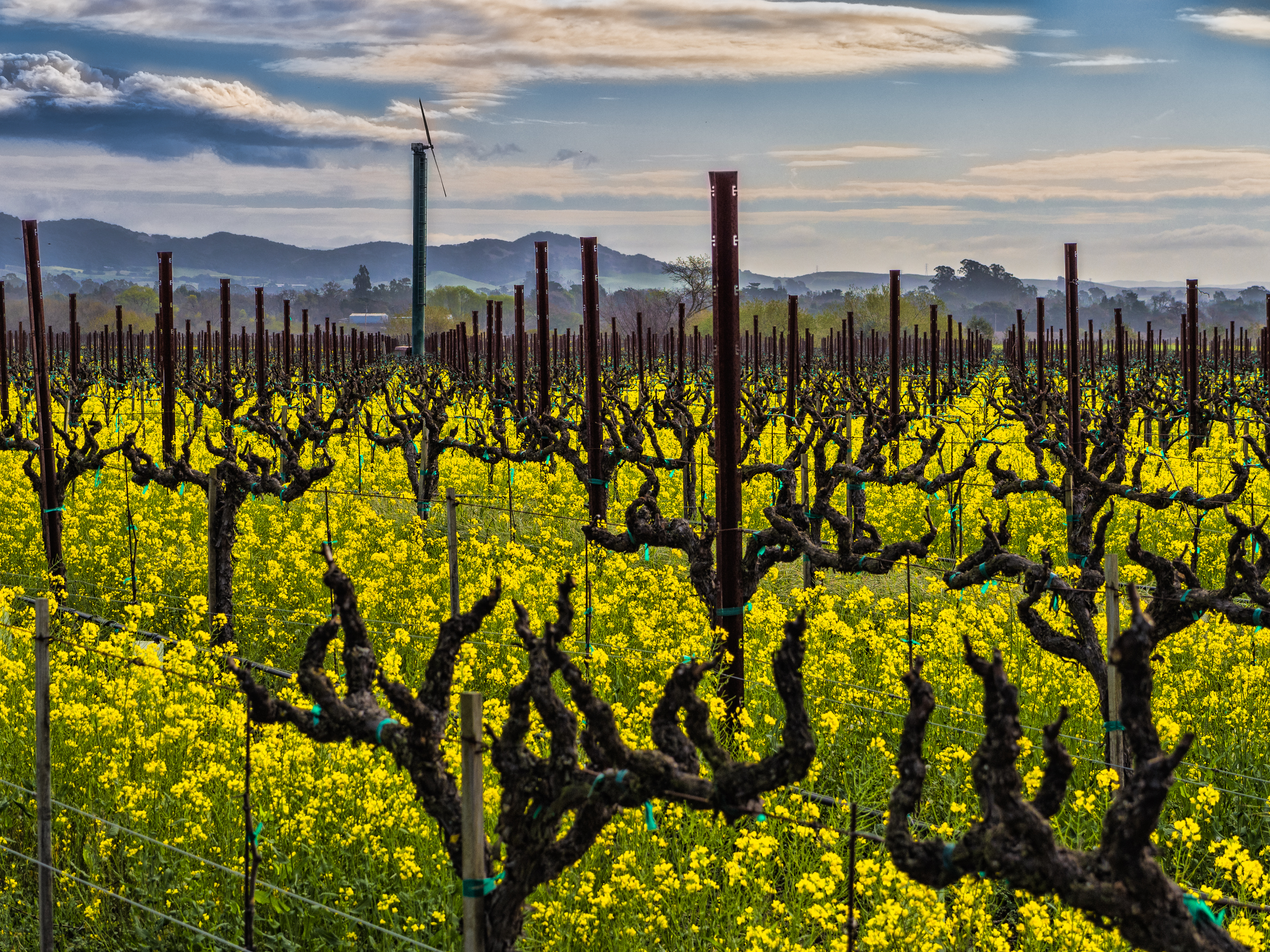 Sonoma_Spring_Morning-17-Edit.jpg