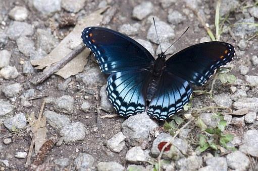 Transition - Navigating through life transitions.