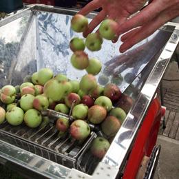 apples_260px_DSCF0405.jpg