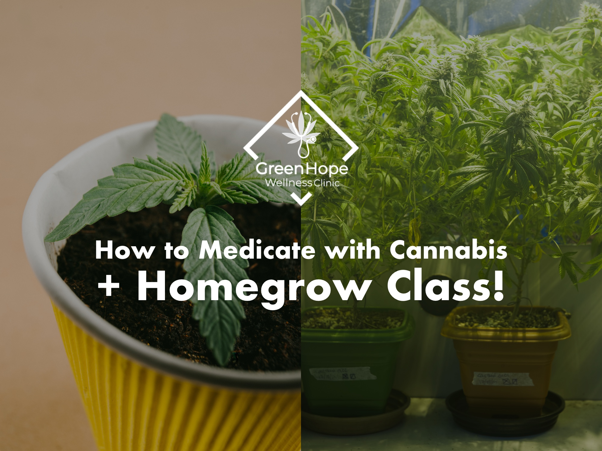 cannabis homegrow.jpg