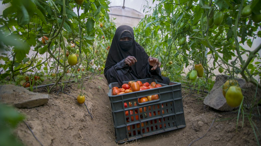Deserts to Green Lands, Villagers to Farmers in Yemen - SPARK