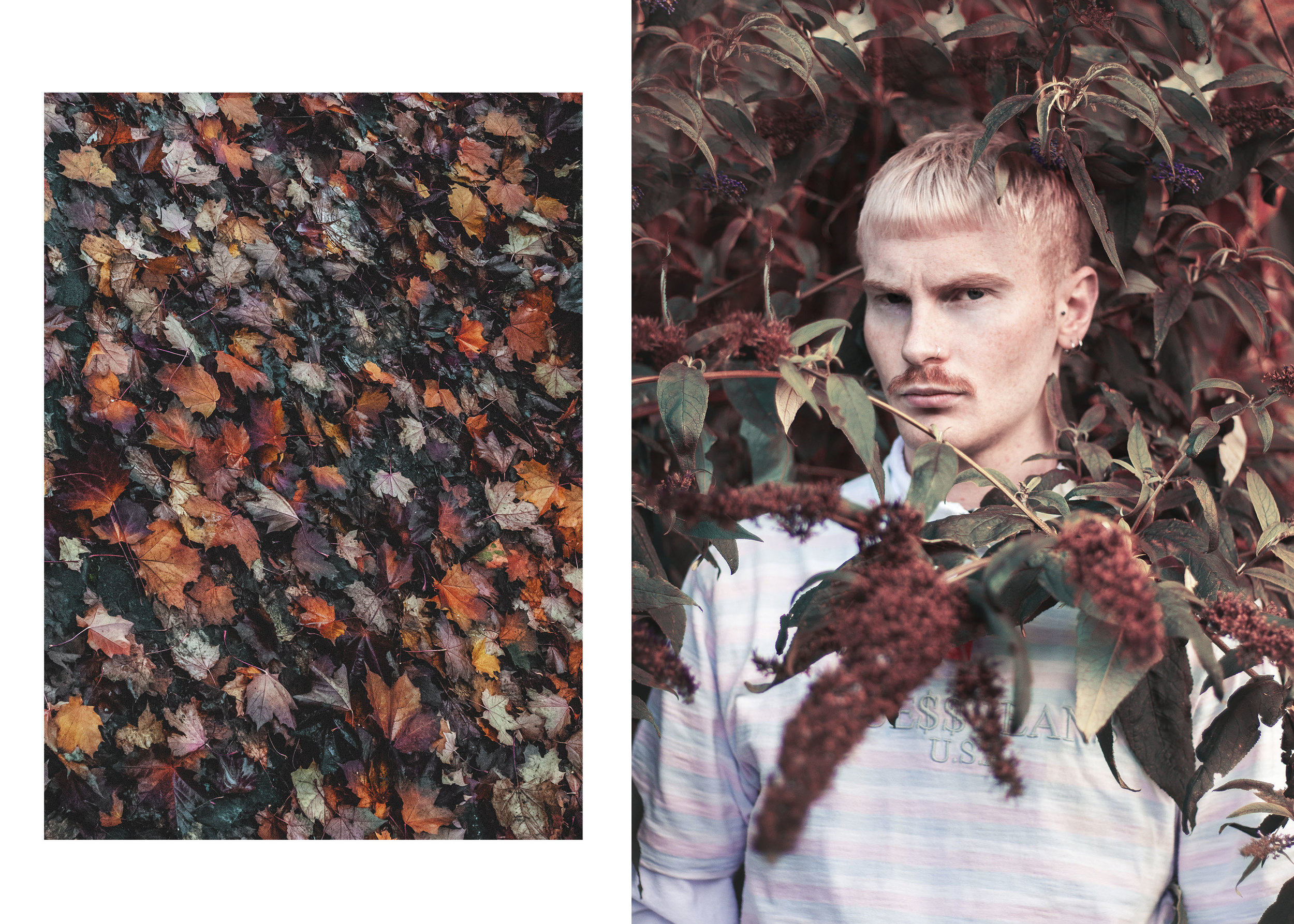 Adam and leaves.jpg