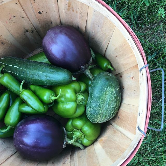 "I had a great visit with my ""little"" sister this week @missie_the_nature_nerd I am always in awe of her garden. She pretty much grows everything, including loofa. Who knew loofa was a plant?! 🌱 This is just a sampling of the ripe vegetables we picked. I love how she has super different passions and talents than I do and I get to learn from her (my super smart nephews taught me a thing or two as well 😉)."