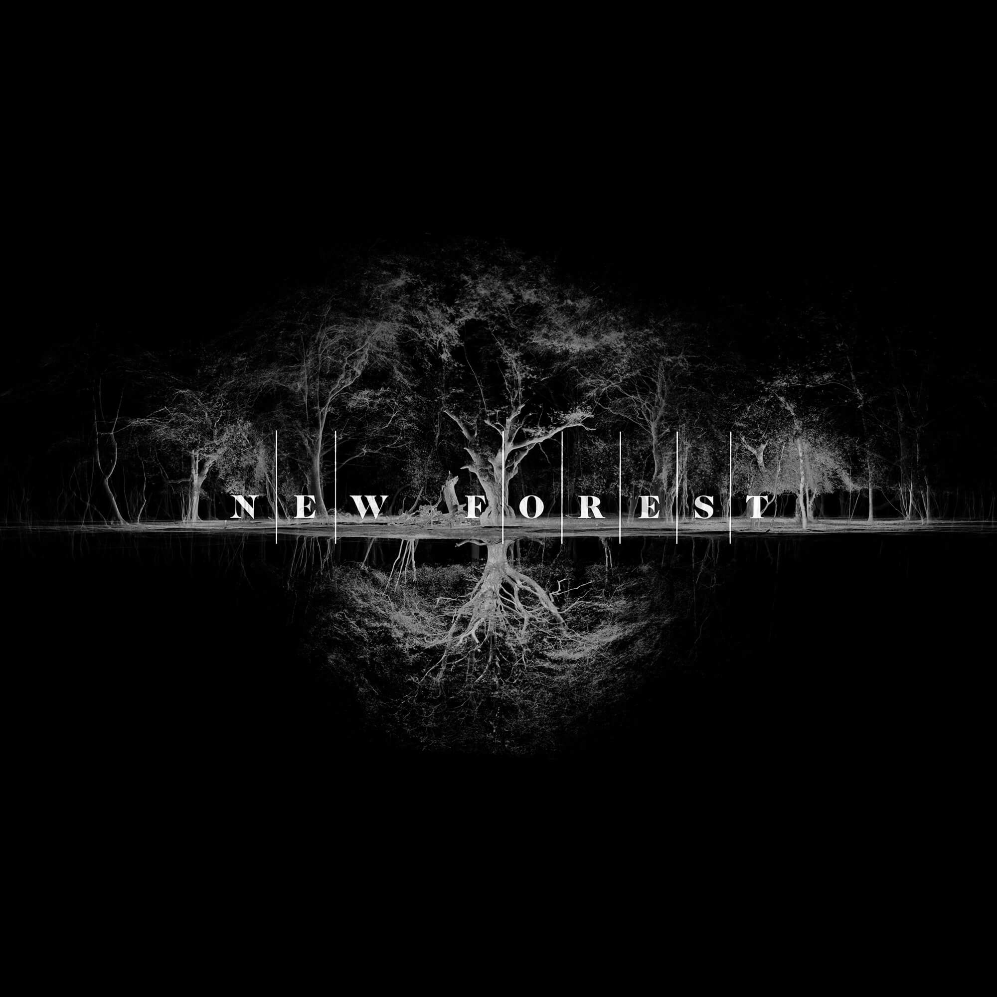 new-forest-film-co-ident-2000x2000.jpg