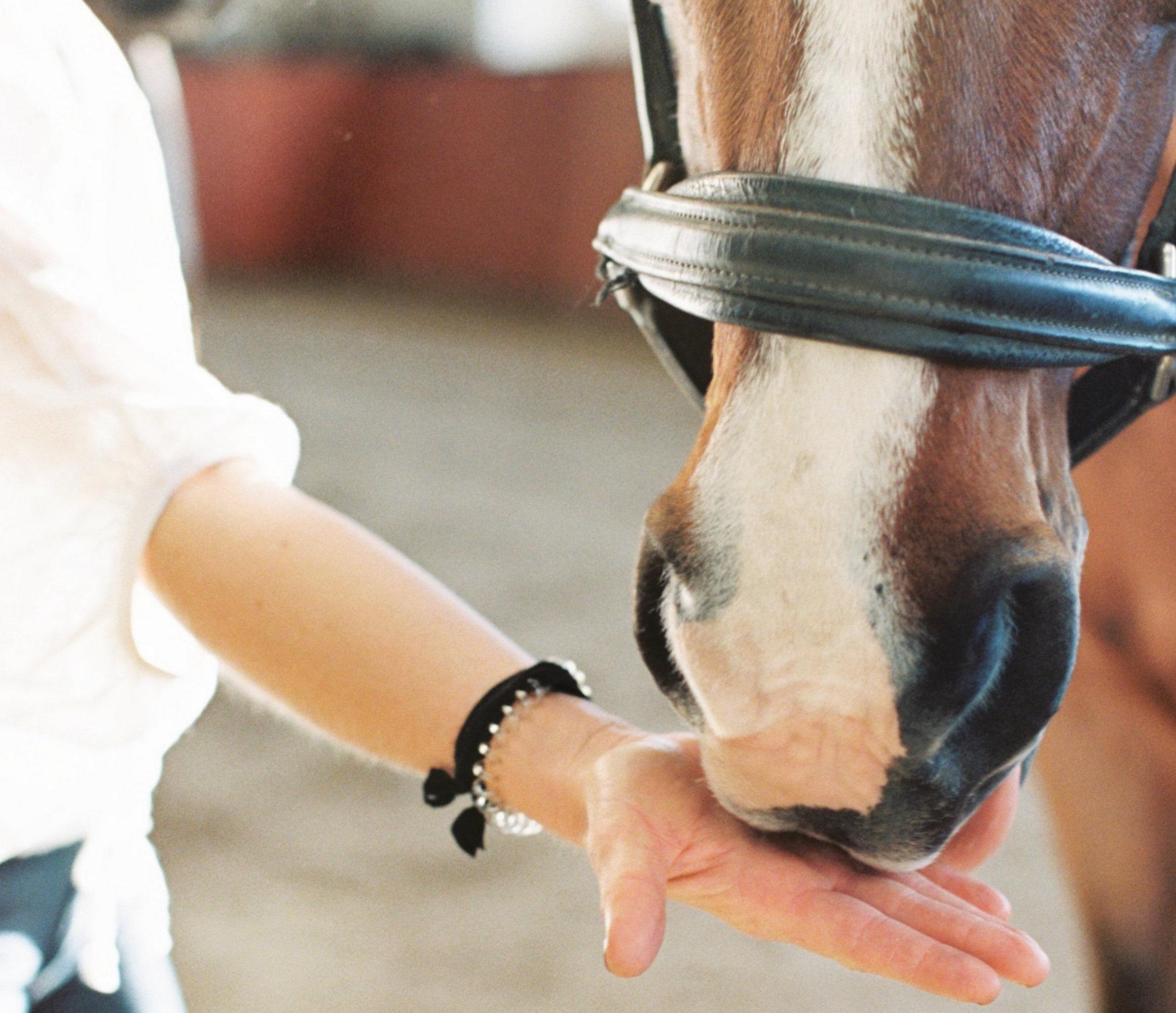horse and hand.jpg