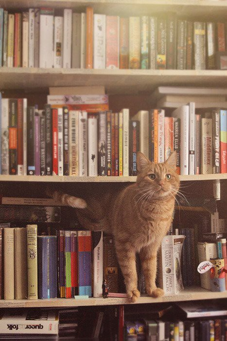 poems-and-cats.jpg