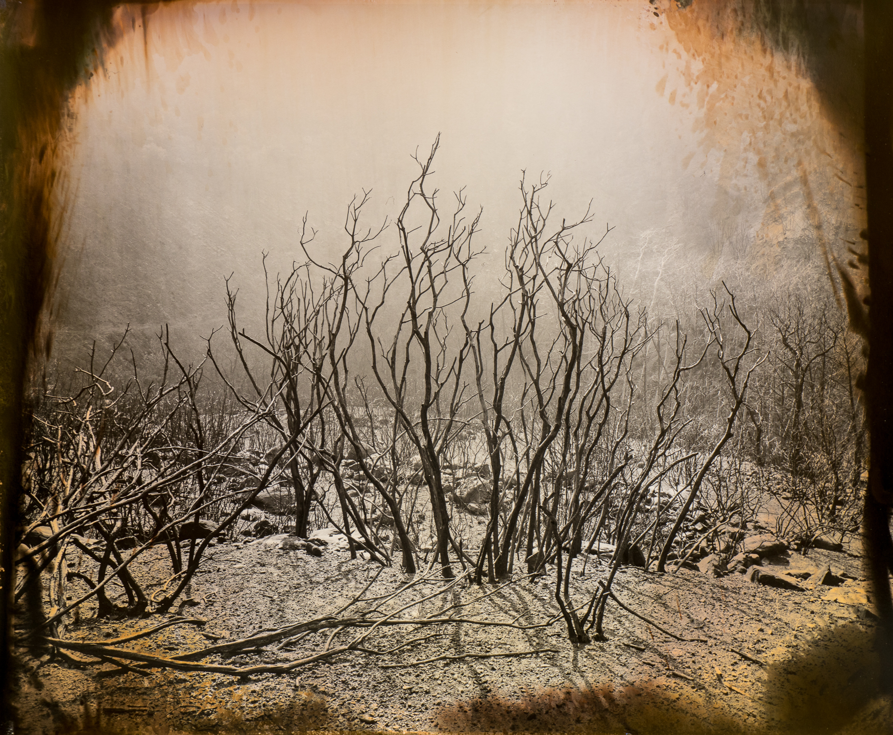 """""""Burning Bush"""" by Luther Gerlach"""