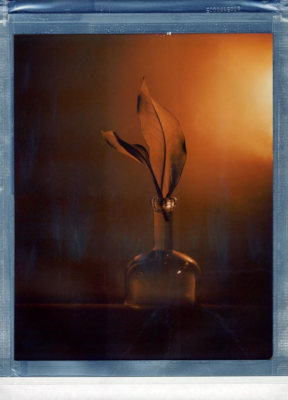 """""""Duo de Magnolia"""" by Valerie Evrard"""
