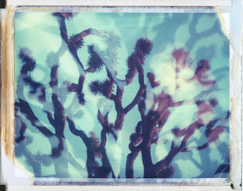 """""""Multiverse"""" by Joann Edmonds"""