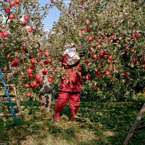 """Harvest #22"" © Hiroyo Kaneko"