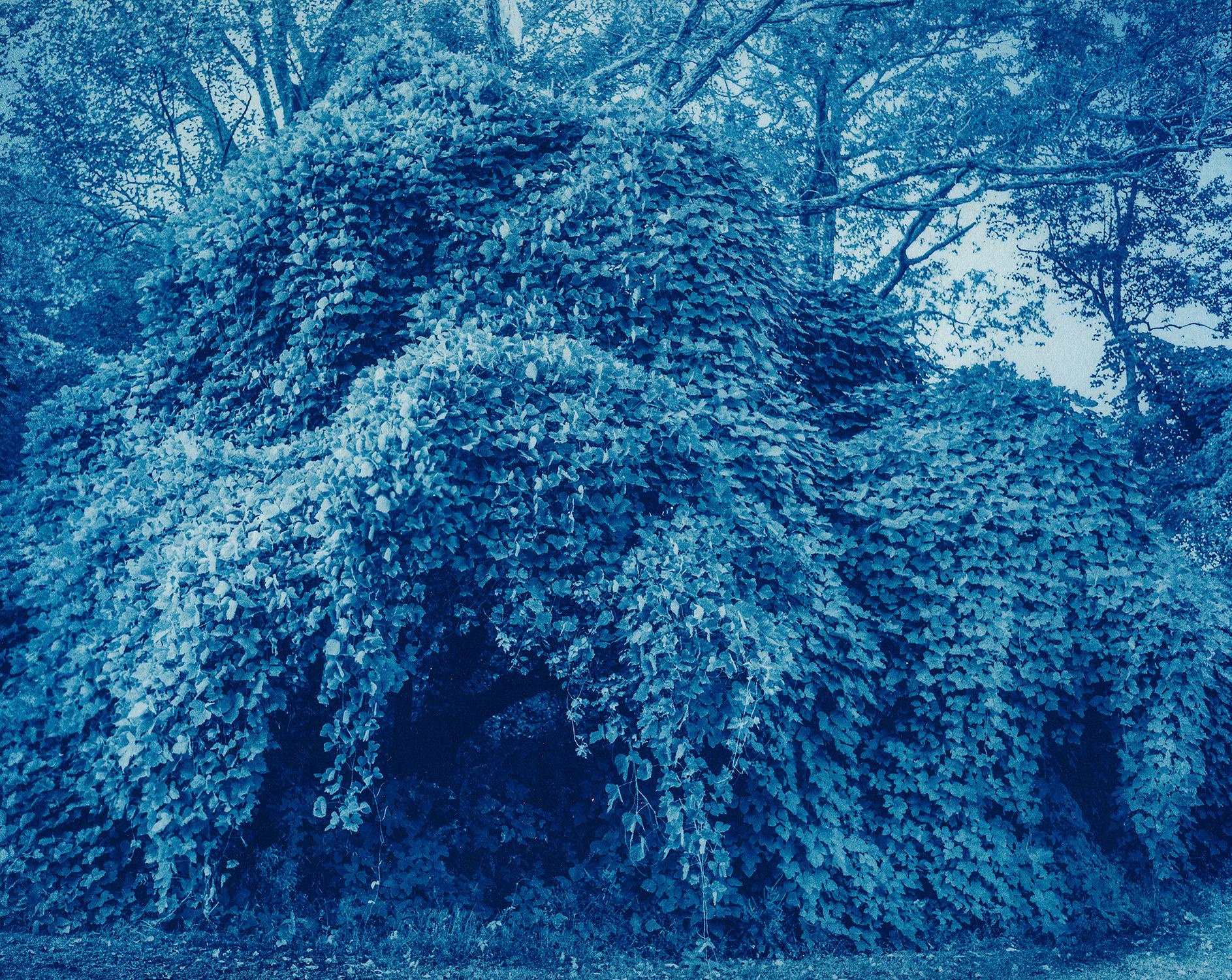Covered Tree.jpg