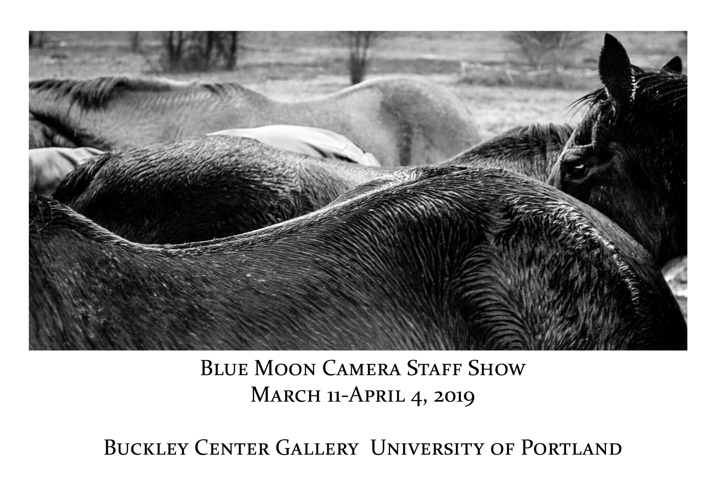 Blue Moon Camera and Machine 2018 Annual Customer Show