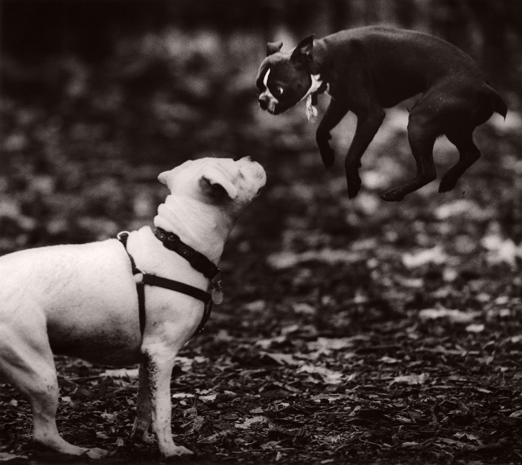 Crouser_M_Dog34.jpg